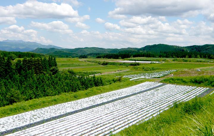 熊本県阿蘇郡小国町、圧倒的なスケールの農地。再生する覚悟を決める。