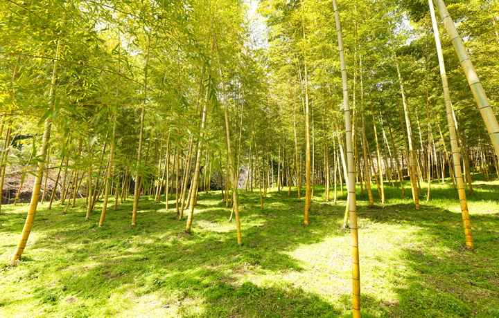 管理が行き届かなくなった竹林、荒廃していく山