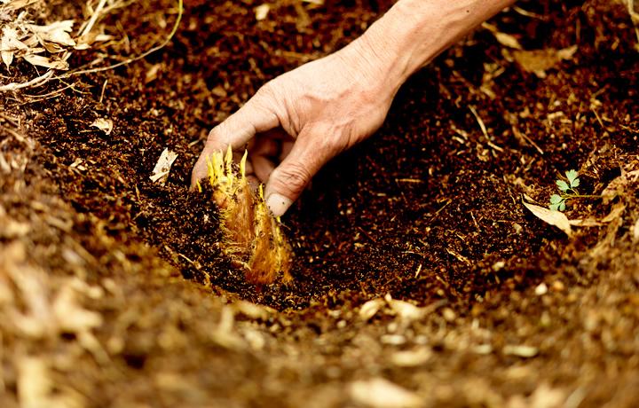 竹林の整備・管理から、竹林の需要を創る事業開発へ