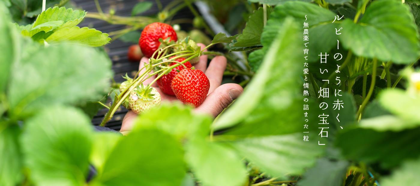ルビーのように赤く、甘い「畑の宝石」